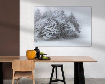 Winter Wonderland in de mist van Herke Kaandorp
