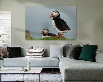 Papegaaiduiker op het eiland Mikines