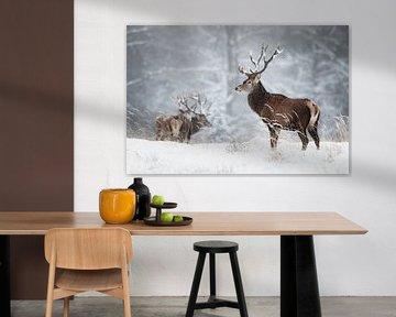 Hirsche im Schnee von Daniela Beyer