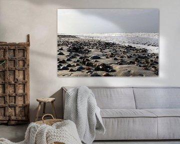 schelpen op het strand van domburg