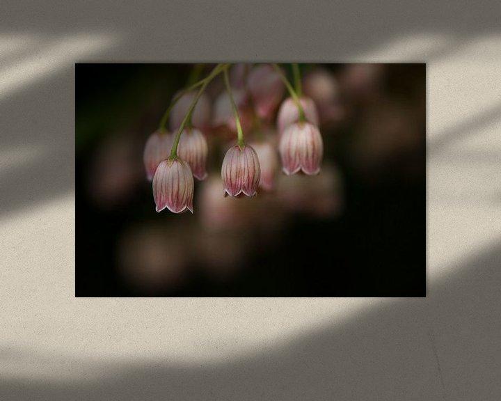 Sfeerimpressie: Het Pronkklokje bloeit prachtig in het voorjaar van Margo Schoote