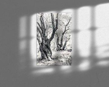 Alte Olivenbäume von Bep van Pelt- Verkuil