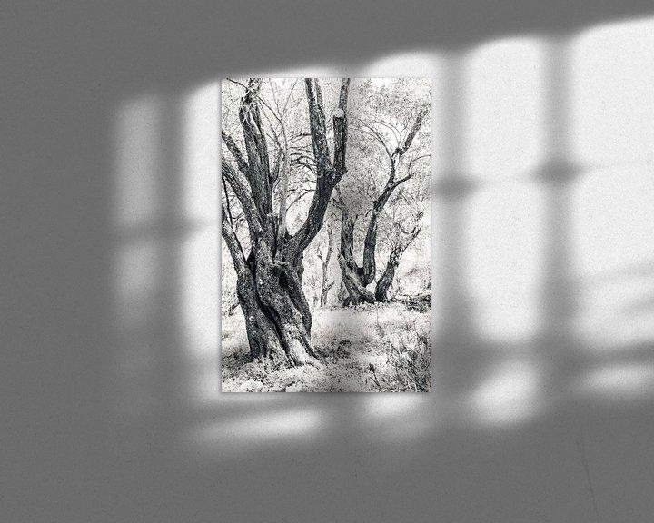 Impression: Les oliviers anciens sur Bep van Pelt- Verkuil