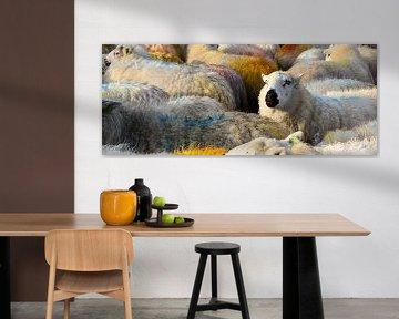 Bunte Schafe von Fred Lenting