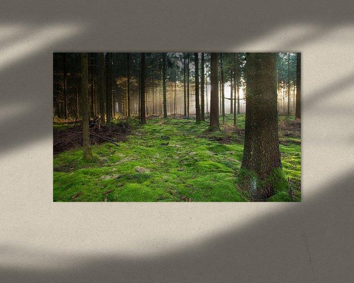 Beispiel: bos von Anne Koop