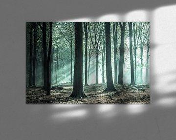Green magic in het Speulderbos van Niels Barto