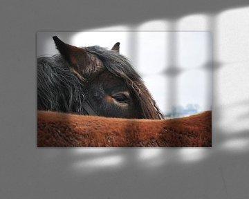 Pferde im Winter / Pferde im Winter von Henk de Boer