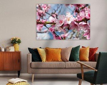 Pfirsichblüte von INA FineArt