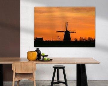 Hollands oranje van Pauline Rote