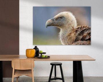 Portret van een Vale Gier van Photo Henk van Dijk