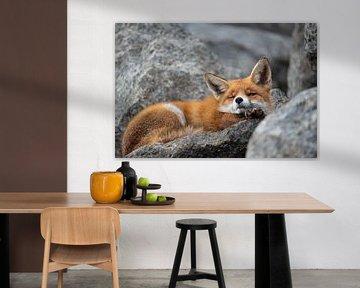 Lazy Fox van Rick Ermstrang