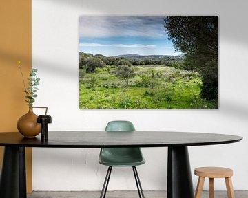 het landschap van sardinie ook wel costa esmeralda genoemd van ChrisWillemsen