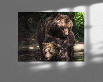Braunbär : Ouwehands Dierenpark von Loek Lobel