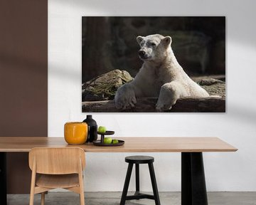 Eisbär : Ouwehands Dierenpark von Loek Lobel