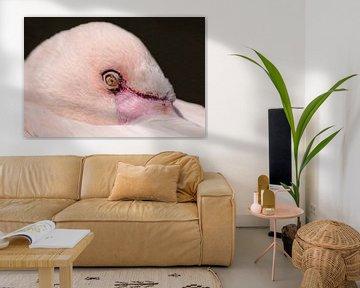 Flamingo : Ouwehands Dierenpark von Loek Lobel