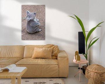 Sitzender Koala von Erwin Blekkenhorst