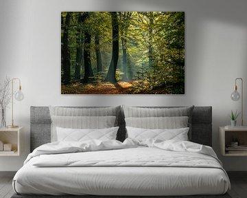 Magische bos van P Leydekkers - van Impelen