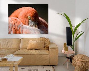 Roter Flamingo : Tierpark der Alten Hand von Loek Lobel