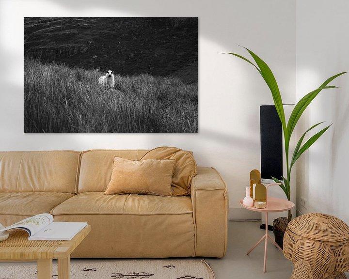 Sfeerimpressie: Iers schaap in de Black Valley van Licht! Fotografie