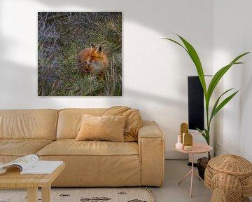 Ein Fuchs im Gebüsch von Patrick Herzberg
