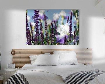Sommer Gärten,  Lavendel und Lilien Duft