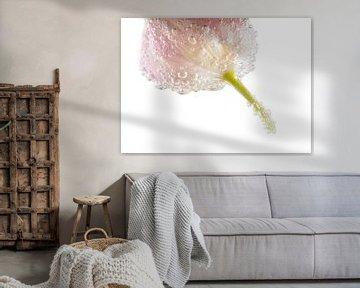 Tulpe in Blasen von Bernardine de Laat