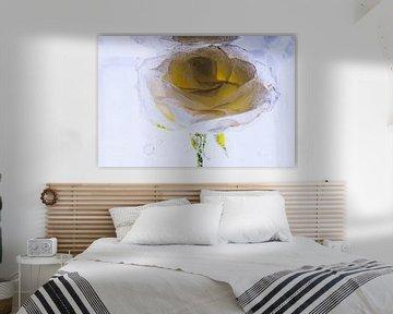 Gelb-weiße Rose in Eis 1 von Marc Heiligenstein