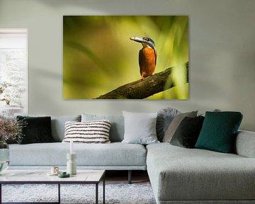 Ijsvogel van HJ de Ruijter