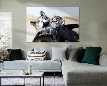 Kitten met moeder poes von Rene du Chatenier