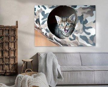 Kitten open bek von Rene du Chatenier