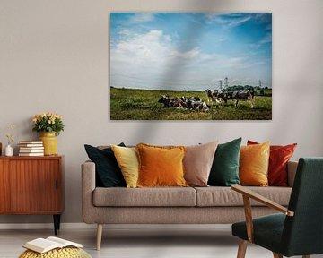 Limburgse Koeien van Guus Quaedvlieg