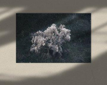 Blühender Mandelbaum von Jan Katuin