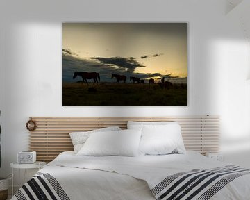 Paarden op de Grote Karoo van Theo van Woerden
