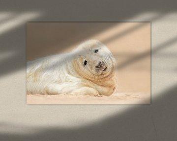 Zeehonden puppy van Gladys Klip