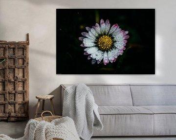 Gänseblümchen von Arjen Uijttenboogaart