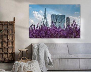 Erasmusbrug met lavendel in Rotterdam