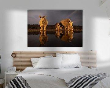 Een neushoorn familie arriveert bij het vallen van de avond bij een drinkplaats van Peter van Dam