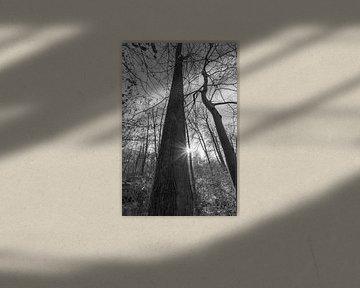 Sonne im Wald schwarz weiß von Martin Haunhorst