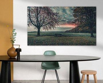 Sonnenaufgang in den Baumbergen von Steffen Peters