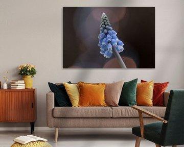 Bokeh blaue Traubenhyazinthe von Tania Perneel