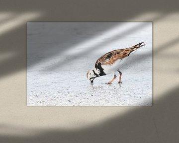 Steenloper von Hennie Zeij