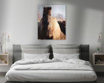 De (leidmerrie) kudde leider van een kudde wilde Konikpaarden in Oostvaardersplassen van Maarten Oerlemans
