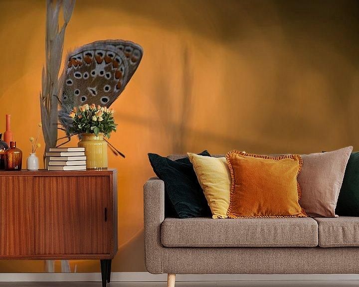 Sfeerimpressie behang: Icarusblauwtje bij ondergaande zon van Jan Jongejan