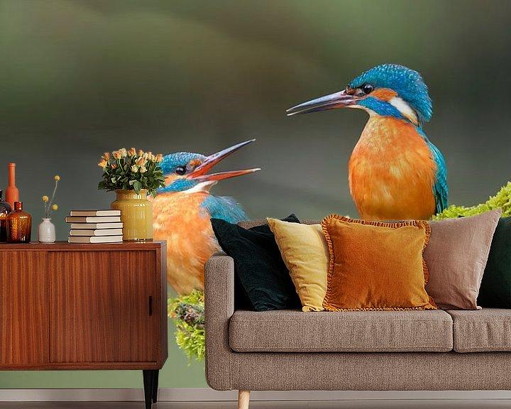 Impression: Le martin-pêcheur - Les premiers amours dans le panorama sur IJsvogels.nl - Corné van Oosterhout