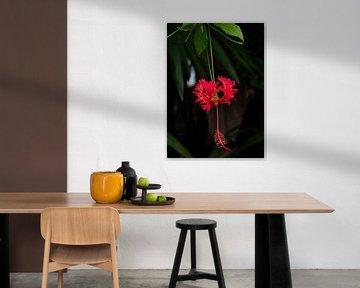 Hibiscus rouge sur Bianca ter Riet