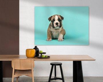 Englischer Bulldoggen-Welpe von Elles Rijsdijk