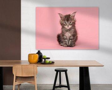 Main Coon Kätzchen von Elles Rijsdijk