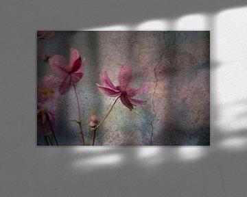 Mauerblümchen von Pauli Langbein
