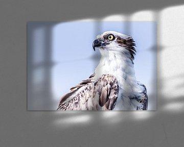 Der Fischadler von Hennie Zeij