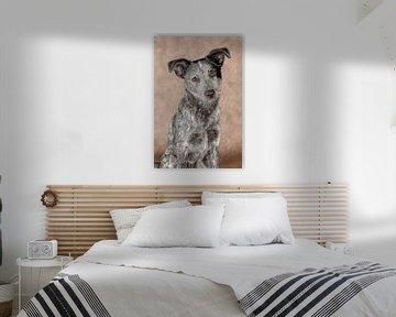 Australischer Cattle Dog von Tony Wuite